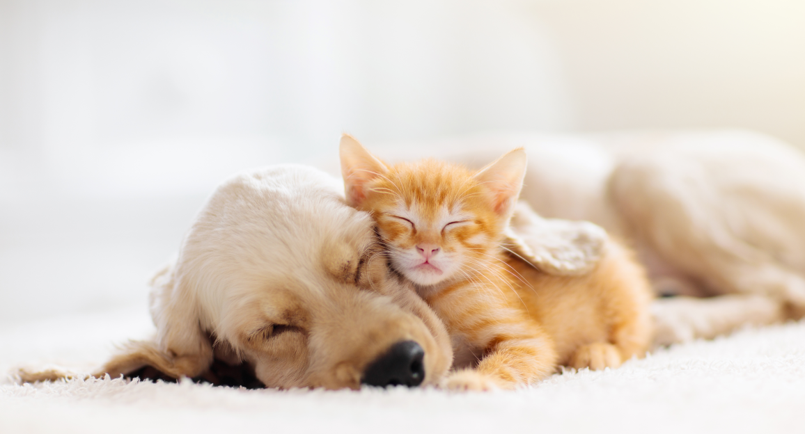 Tierpflege